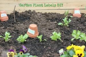 Garden Plant Lables