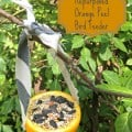 re-purposed orange peel bird feeder
