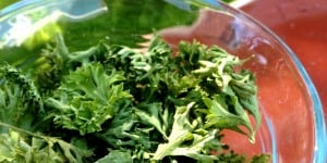 Easily Dehydrate Parsley To Enjoy Year Round