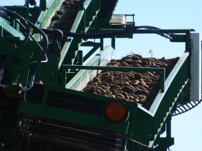 Colorado Potato Harvest 2013
