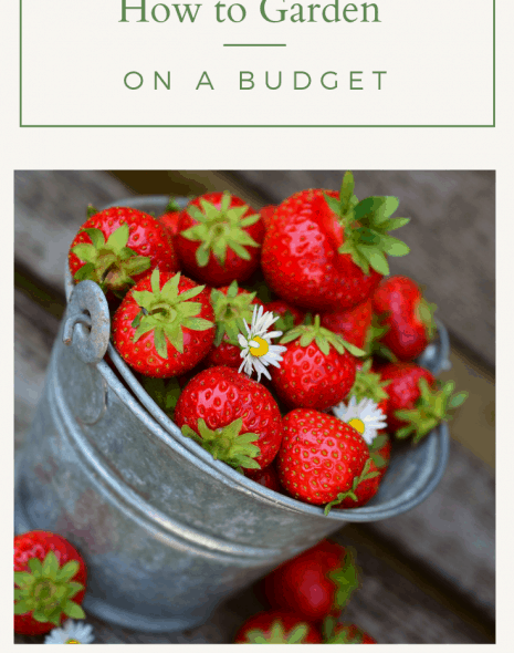 A galvanized bucket of strawberries with the words how to garden on a budget written on it.