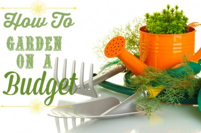 How to garden in a budget