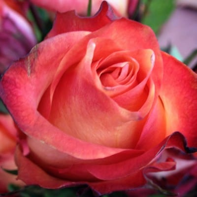 The Bouqs Floral Delivery