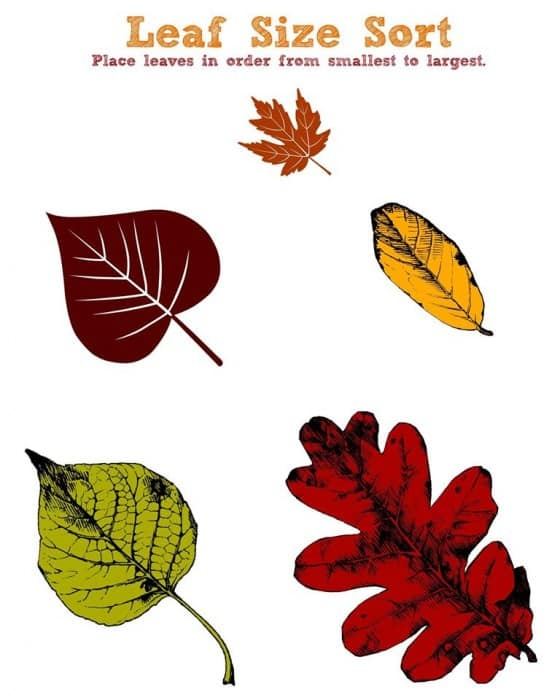 Fall Worksheets - Leaf Size Sort Printable