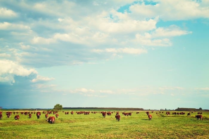 How to protect livestock from predators