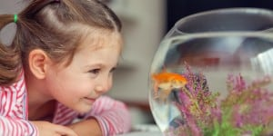 Tips For Taking Care Of A Fish Tank