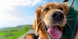 Is a pet a must or a luxury for a family?
