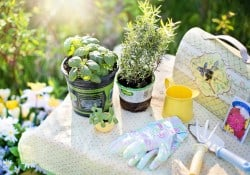 Planting an herb garden with gloves and tools on a table.